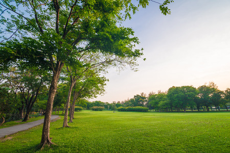 Park and recreation area in the city, Green field and tree photo