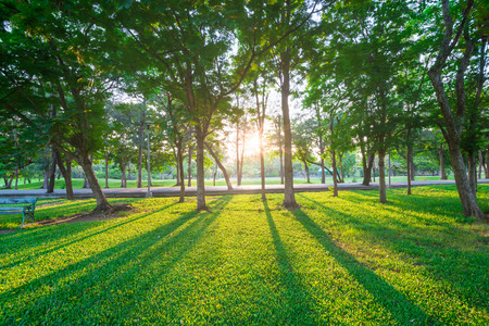 Park and recreation area in the city, Green field and tree 版權商用圖片 - 38385010