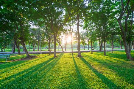 heaven?: Parque y zona de recreo en la ciudad, el campo verde y el �rbol Foto de archivo