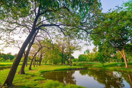 recreation area: Park and recreation area in the city with tree and green lawn