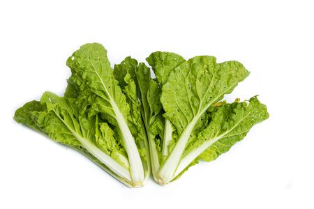 gentile: Fresh organic lettuce over white background, Healthy life
