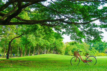Bicycles in the central Park under big tree with green leaf