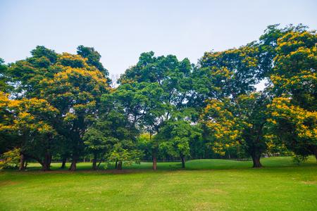 Grünen Rasen im Park und Erholungsgebiet, grüne Landschaft