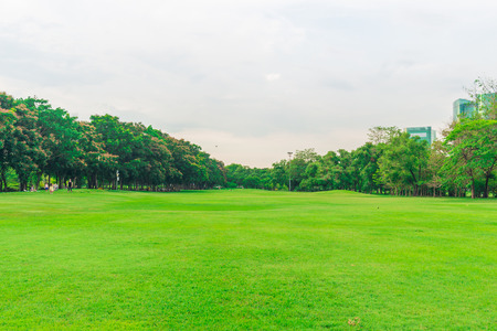 Green lawn with tree in city park, Beautiful park in evening for recreation Standard-Bild