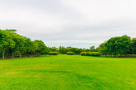 Green lawn with tree in city park, Beautiful park in evening for recreation photo