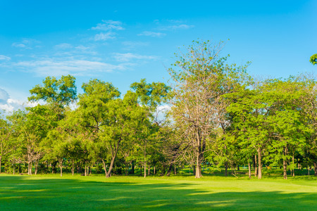 Beautiful meadow and tree in the park, Bangkok Thailand Banque d'images