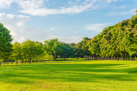 green meadow: Beautiful meadow and tree in the park, Bangkok Thailand Stock Photo