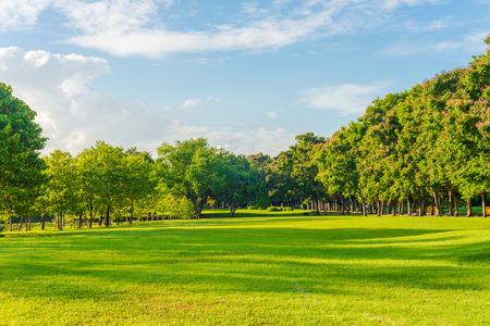 Beautiful meadow and tree in the park, Bangkok Thailand Foto de archivo