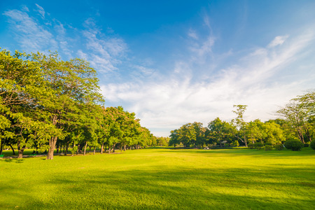 recreation: Beautiful meadow and tree in the park, Bangkok Thailand Stock Photo