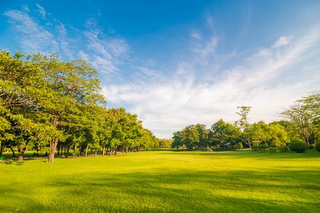parken: Schöne Wiese und Baum im Park, Bangkok Thailand
