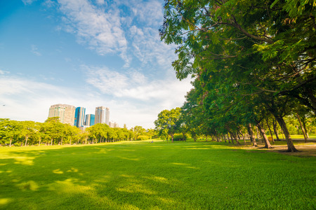 Beautiful meadow and tree in the park, Bangkok Thailand Archivio Fotografico
