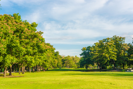 Beautiful meadow and tree in the park, Bangkok Thailand Stock Photo