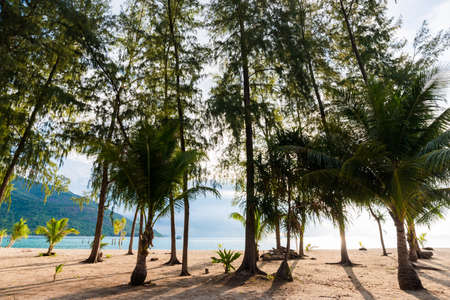 andaman sea: Beautiful view of Andaman sea and sky from pine tree forest, Lipe Satun, Thailand