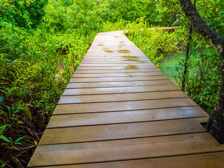 travelled: Mangrove forest with wood Walk way in Krabi, Thailand