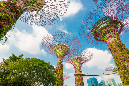 bay: View of The Supertree Grove at Gardens by the Bay, singapore