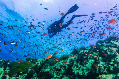 Scuba Diver on coral reef in clear blue water, Diving at South West Pinnacle on Koh Tao, Thailand Stock Photo