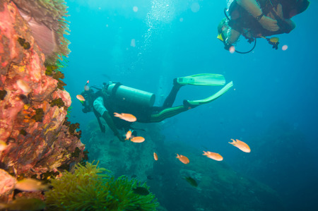 Scuba Diver on coral reef in clear blue water, Diving at South West Pinnacle on Koh Tao, Thailand Stok Fotoğraf