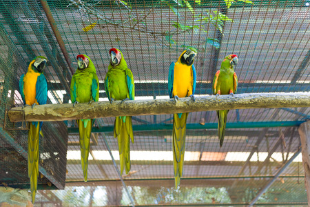 mccaw: Row of beautiful macaw parrot sitting on log