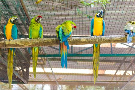 maccaw: Row of beautiful macaw parrot sitting on log