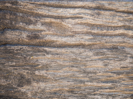 wood surface: Old wood texture, wood surface