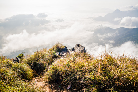 dreamy: Deep misty valley in northern of Thailand, dreamy landscape. Stock Photo