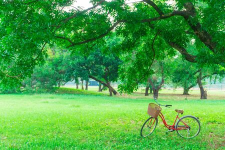 space weather tire: Red bicycle in the garden green lawn, City park