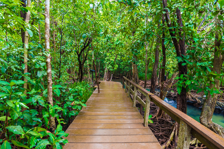 thapom: Wooden pathway around mangrove forest, Thapom Krabi Thailand