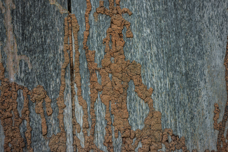 crosscut: Termite track on wooden wall, texture of the old spoiled wood.