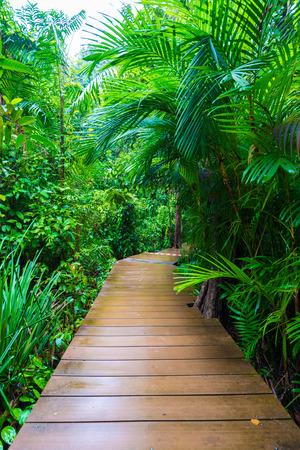 unwanted flora: Wooden pathway around mangrove forest, Thapom Krabi Thailand