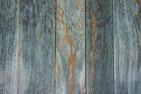 Termite Track auf Holzwand, Textur der alten verdorben Holz.