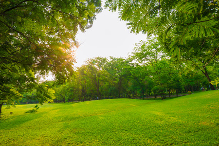 Green grass park at sunny day