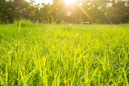 Green grass field in big city park with sun light Banco de Imagens