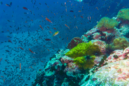 abundant: Coral reef covered in hard corals, soft coral with abundant fish life