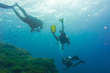Scuba diving on coral reef in sea, Koh Tao, Thailand