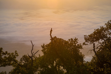 faintly visible: Morning sky background on sunrise with fog. Nature composition.