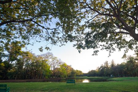 citypark: Green garden citypark evening sunset