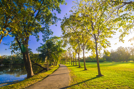 Pavement in park with green lawn sun light, Stone Pathway in a Green Park Foto de archivo