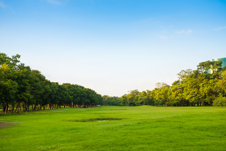 green park: Green park with lawn and big trees. Stock Photo