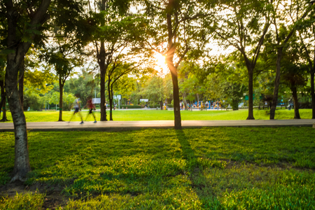 abundant: Green park with lawn and big trees. Stock Photo
