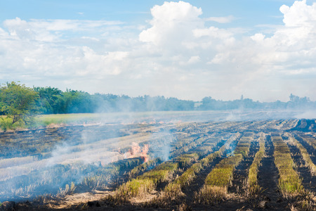 planting season: Burning in rice to start a new planting season, Burning straw stubble farmers Stock Photo