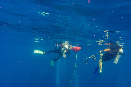 live coral: Scuba Divers swimming over the live coral reef for training open water Editorial