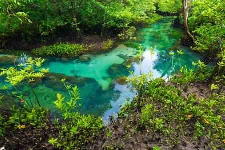 flooded: Flooded trees in mangrove rain forest. Green nature scene Stock Photo