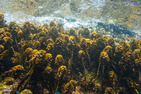 firefish: Coral reef in motion blurred underwater scene, Hard coral Stock Photo