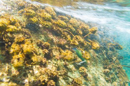 hard coral: Coral reef in motion blurred underwater scene, Hard coral Stock Photo