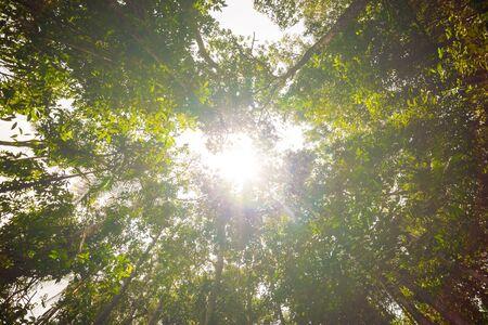 rainforest background: Tropical Rainforest Landscape background green tree, Wild tropical forest