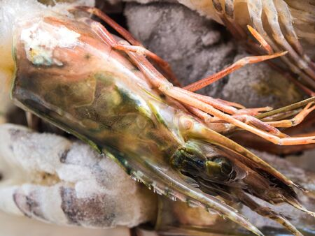 freezed: Sea tiger shrimp freezed with ice, Sea food object Stock Photo