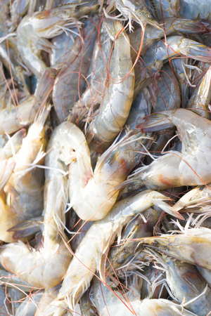 tiger shrimp: Raw fresh tiger shrimp in fishery market on morning