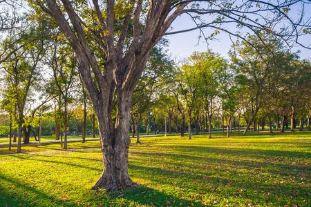 Parc public vert Summmer avec branche d'arbre, belles pelouses vertes