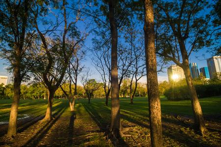 Grüne summmer öffentlichen Park mit Baumzweig, schönen grünen Rasen