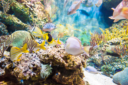 ichthyology: Underwater world of exotic fishes in an aquarium, Singapore SEA